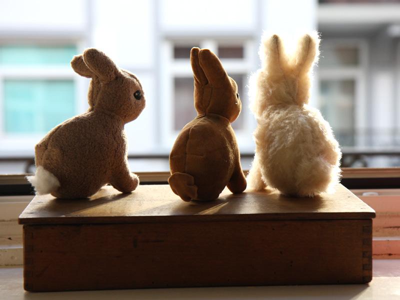 kaninchen   Kleine Viecher