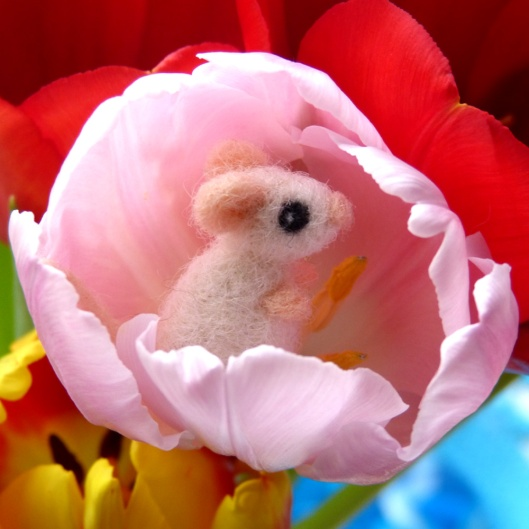 tulpen_sophie_rosa