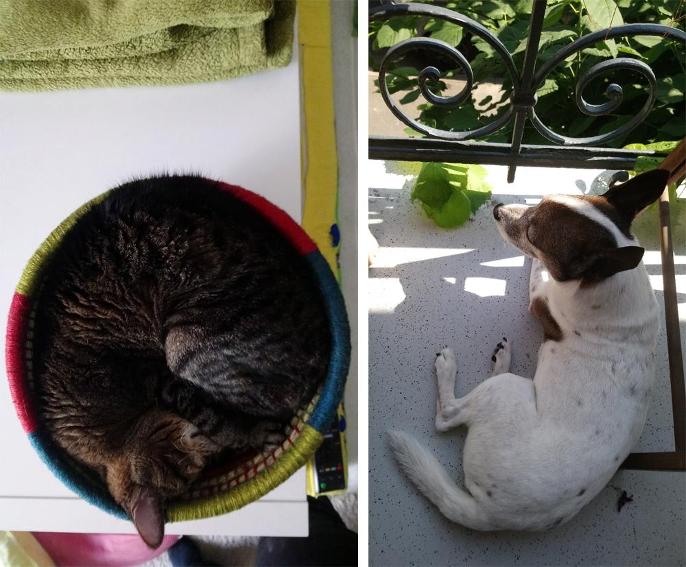 katzenmandala und sonnengruss.jpg