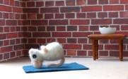 adventskalender_2020_04_yoga_schwanzstand