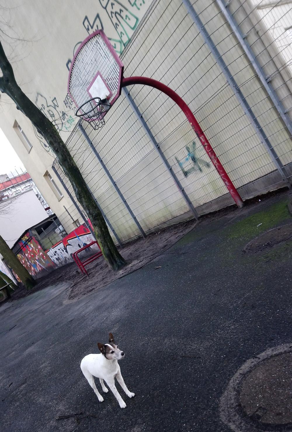 urbanstreetdog